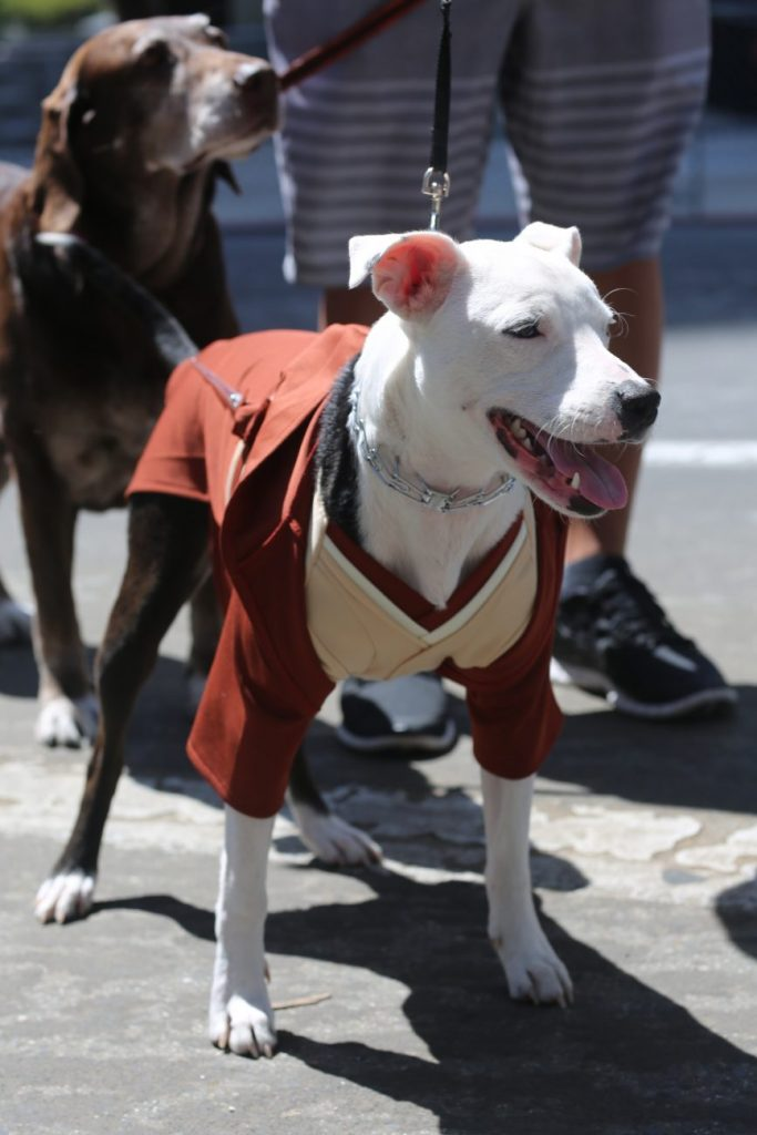 Doggy Cosplay: 14 Dog Costumes at Silicon Valley Comic Con 2017