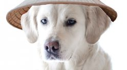 dog in a rice hat